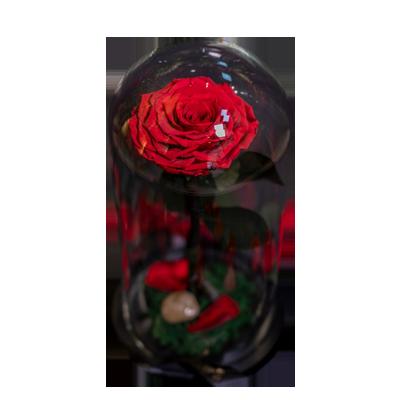 Red Infinity - Long Stem